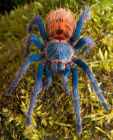Green bottle blue tatantula