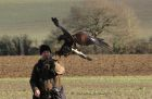 Eagle falconry